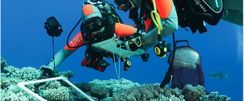 Tara pacific : expédition au coeur du corail