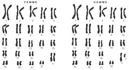 PSL-Explore-Focus-caryotype