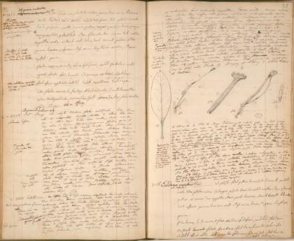 Journal de botanique