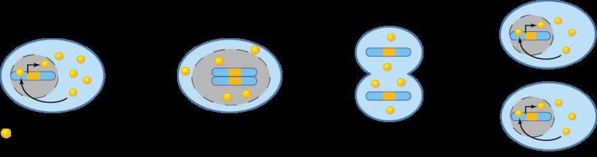 Facteurs de transcription