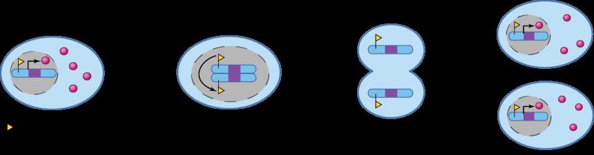 Modification de la chromatine